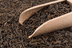 Wild brown rice in spoon Royalty Free Stock Image
