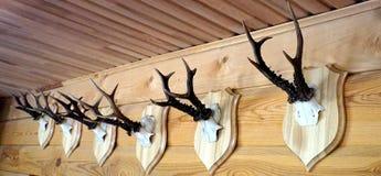 Wild buck horns Stock Photo