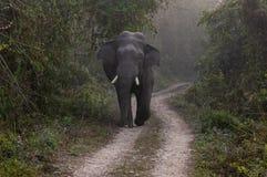 Wild Bull Elephant on the Road. A wild bull elephant on the road in the jungle stock photos