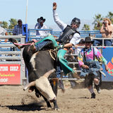 Wild Bull Rider Royalty Free Stock Photos