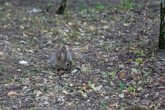 Wild bunny park stock photography