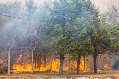 Wild Bush Fire stock photos