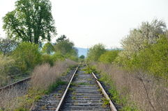 A wild bush grows and flourishes in the middle of a railway line along the railroad tracks. The line is, however, closed down and Stock Photo