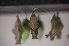 Wild Butterflies in Saint Martin Royalty Free Stock Photo