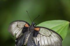 Wild Butterflies in Saint Martin Royalty Free Stock Photos