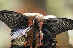 Wild Butterflies in Saint Martin Stock Photos