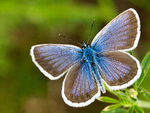 Wild butterfly Royalty Free Stock Image
