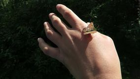 Wild butterfly on hand. Forest nature video stock footage