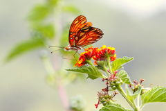 Wild butterfly II Stock Photography