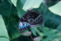Wild butterfly in nature. I shot a wild butterfly in nature it has beautiful colors Royalty Free Stock Images