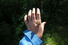 Wild butterfly sitting on hand. Forest nature stock photo