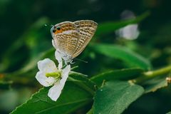 Butterfly on white flower in the nature stock images