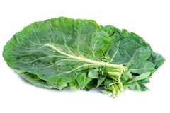 Wild Cabbage Stock Images