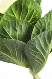 Wild cabbage. Close up shot of  the leaves of wild cabbage, bot.: brassica oleracea, detail view Stock Photos