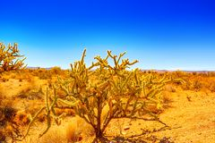 Wild cactus  in natural habitat conditions. USA stock images