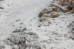 WILD Camouflaged Snow Leopard Panthera Uncia in Tibet resting on a mountain side.  Stock Photos