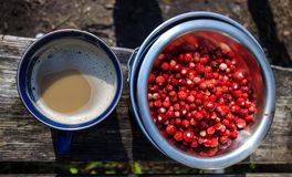 Wild camping breakfast. With coffee and wild strawberries Stock Photos