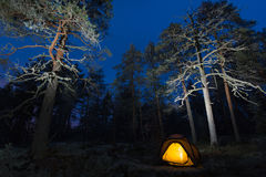 Wild camping in wilderness. In old forest Stock Image