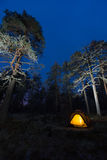 Wild camping in wilderness. In old forest Stock Images