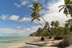 Wild Caraïbisch strand stock foto's