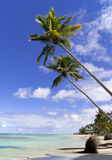 Wild caribbean beach Stock Images