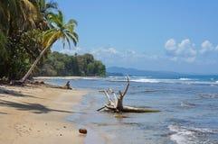 Wild Caribbean coast in Costa Rica Chiquita beach Stock Images