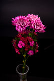 Wild carnations and Chrysanthemums Stock Images