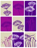 Wild carrot. Vector collage of wild flowers Stock Photos
