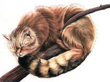 Wild cat. A beautiful drawing of a wild cat sleeping on a tree. It's handdrawn with pencils stock illustration