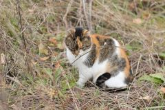 Wild cat autumn portrait Stock Photos