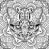 Wild cat on the background circular tribal pattern. Colroing page for adults. Line art Stock Photos
