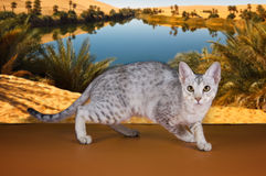 Wild cat on the background Stock Photography