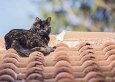 Wild Cat. S on roof taken in Sofia, Bulgaria stock photography
