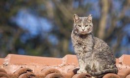 Wild Cat. S on roof taken in Sofia, Bulgaria stock photo