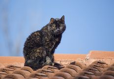 Wild Cat. S on roof taken in Sofia, Bulgaria stock photos
