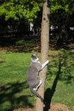 Wild Cat Climbing To Tree Royalty Free Stock Image