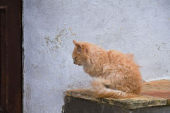 Wild cat. Stock Photo