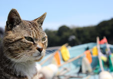 Wild Cat cruising on a boat. A wild cat cruising on a boat near the coast of Tashirojima Island, Japan. It seems to be the captain of the boat Stock Images