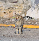 Wild cat on the edge of the road Stock Image