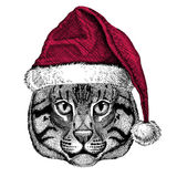 Wild cat Fishing cat Christmas illustration Wild animal wearing christmas santa claus hat Red winter hat Holiday picture Stock Image