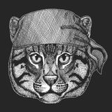 Wild cat Fishing cat Cool pirate, seaman, seawolf, sailor, biker animal for tattoo, t-shirt, emblem, badge, logo, patch. Wild cat Fishing cat Hand drawn image Stock Images