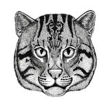 Wild cat Fishing cat Hand drawn illustration for tattoo, emblem, badge, logo, patch Stock Image