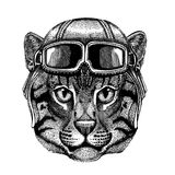 Animal wearing aviator helmet with glasses. Vector picture. Wild cat Fishing cat Hand drawn image for tattoo, emblem. Wild cat Fishing cat Hand drawn image for Stock Photography