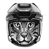 Wild cat Fishing cat Hockey image Wild animal wearing hockey helmet Sport animal Winter sport Hockey sport Stock Image