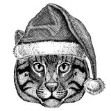 Wild cat Fishing cat wearing christmas hat New year eve Merry christmas and happy new year Zoo life Holidays celebration Royalty Free Stock Image