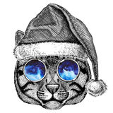 Wild cat Fishing cat wearing christmas hat New year eve Merry christmas and happy new year Zoo life Holidays celebration Stock Photos