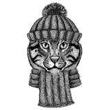 Wild cat Fishing cat wearing knitted hat and scarf Stock Photography