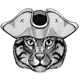 Wild cat Fishing cat wearing pirate hat Cocked hat, tricorn Sailor, seaman, mariner, or seafarer. Wild animal wearing pirate cocket hat Stock Image