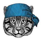 Wild cat Fishing cat Wild animal wearing bandana or kerchief or bandanna Image for Pirate Seaman Sailor Biker Motorcycle Royalty Free Stock Images