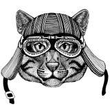 Wild cat Fishing cat Wild animal wearing biker motorcycle aviator fly club helmet Illustration for tattoo, emblem, badge Stock Image